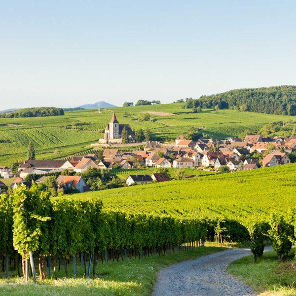 Alsace bike tour