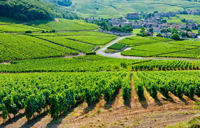 Burgundy bike tour
